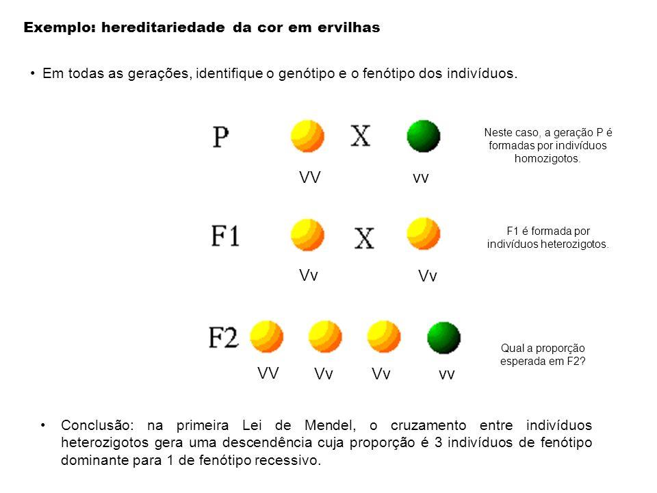VV vv Vv VV Vv vv Exemplo: hereditariedade da cor em ervilhas