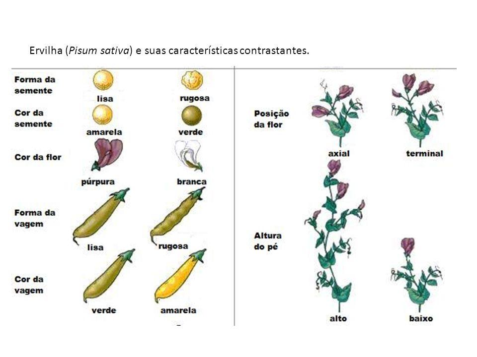 Ervilha (Pisum sativa) e suas características contrastantes.