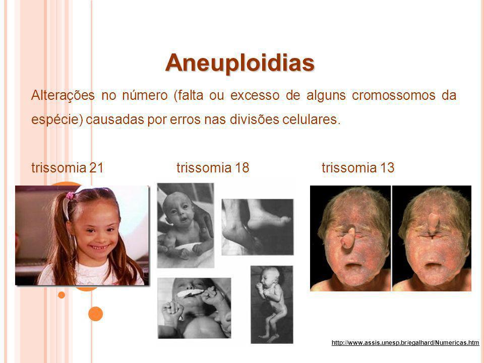 Aneuploidias Alterações no número (falta ou excesso de alguns cromossomos da espécie) causadas por erros nas divisões celulares.