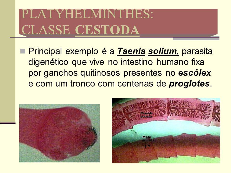 PLATYHELMINTHES: CLASSE CESTODA