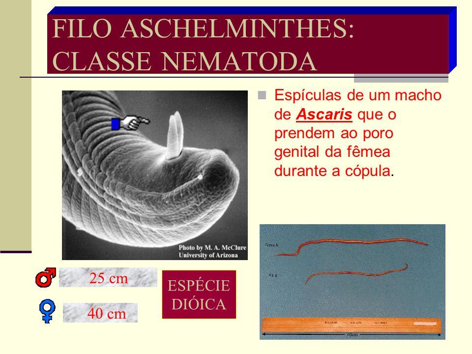 FILO ASCHELMINTHES: CLASSE NEMATODA