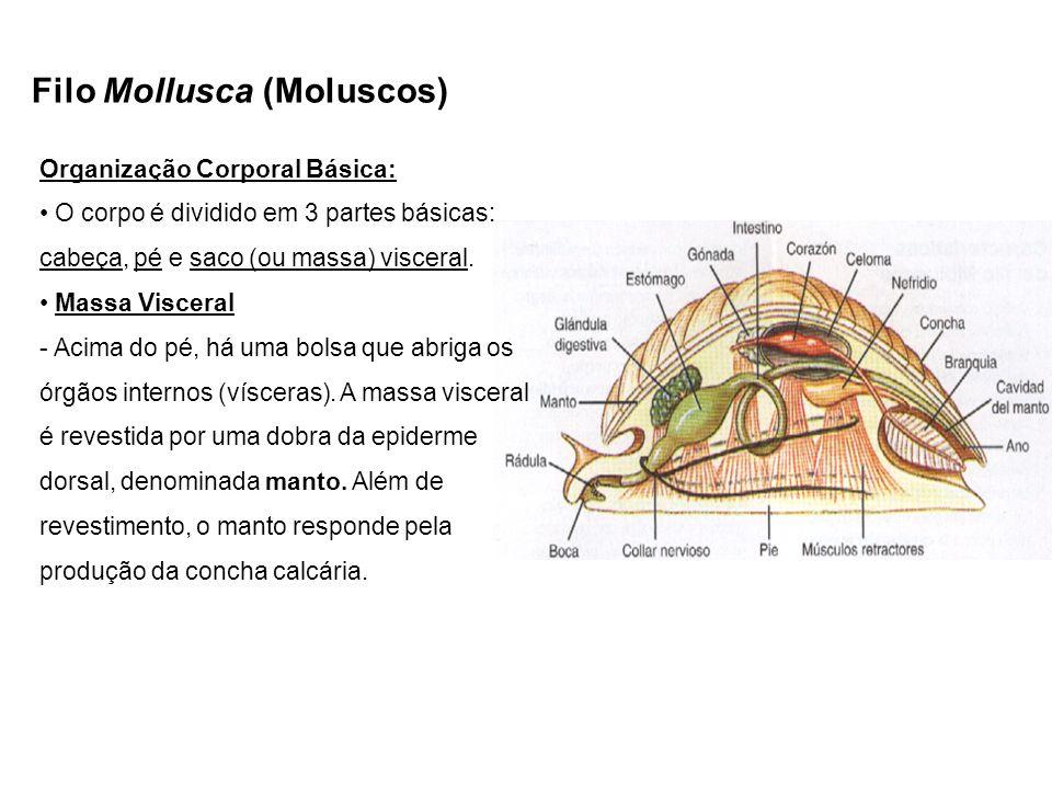 Filo Mollusca (Moluscos)