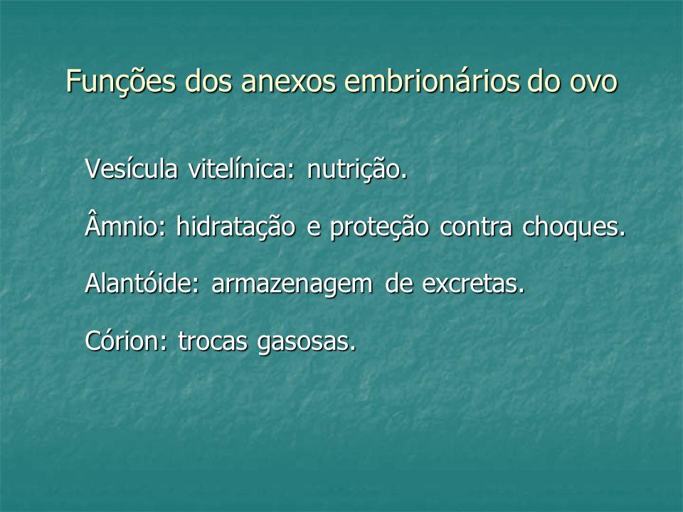 Funções dos anexos embrionários do ovo