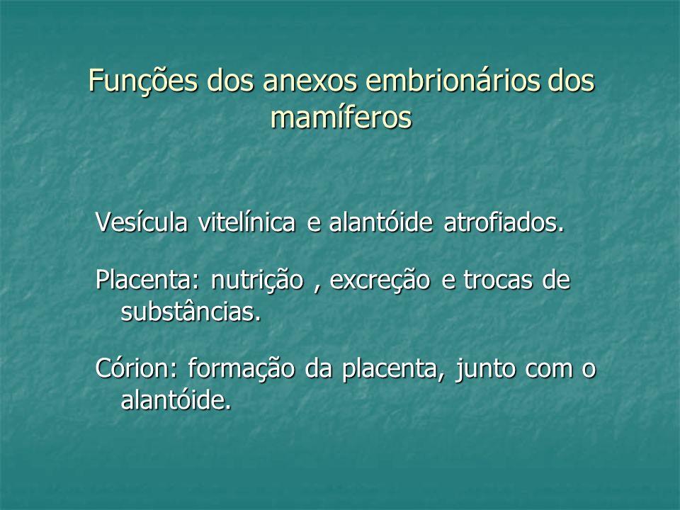 Funções dos anexos embrionários dos mamíferos