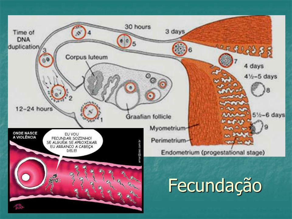 Fecundação