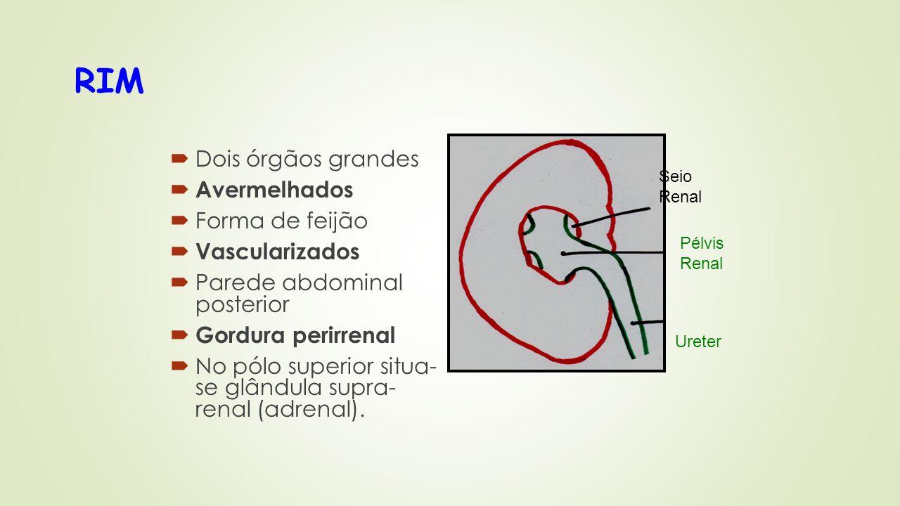 RIM Dois órgãos grandes Avermelhados Forma de feijão Vascularizados