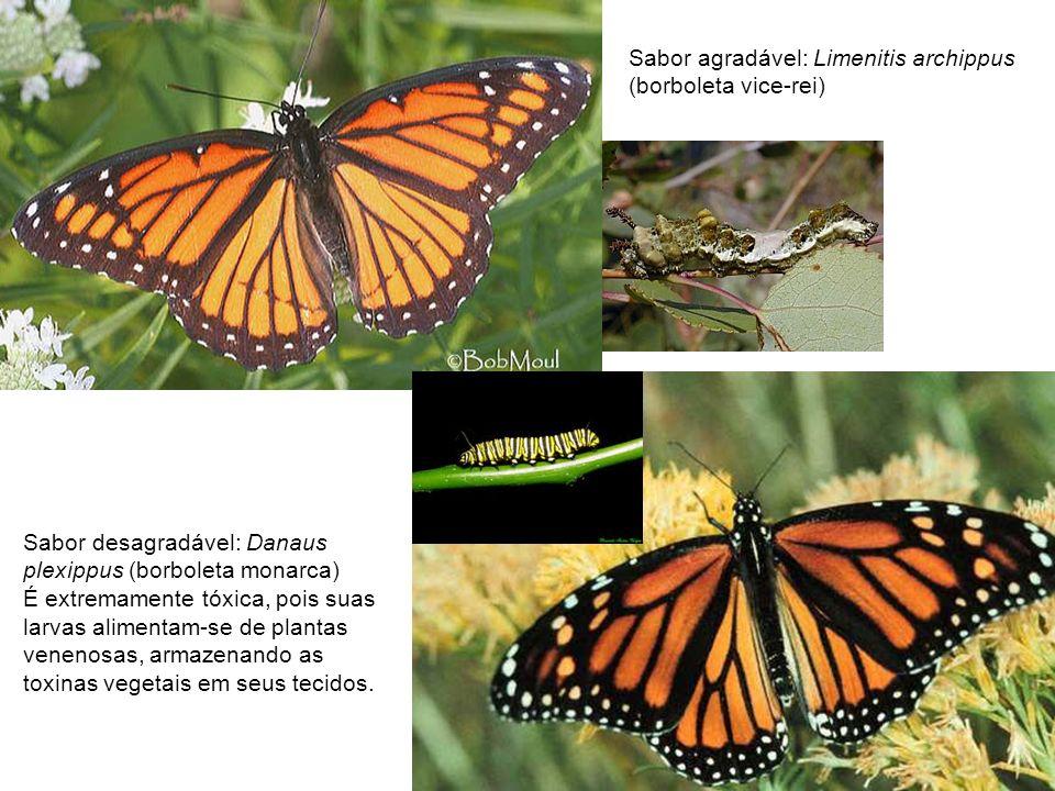 Sabor agradável: Limenitis archippus