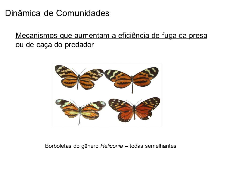Borboletas do gênero Heliconia – todas semelhantes