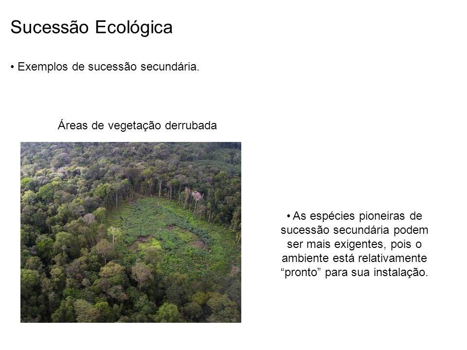 Sucessão Ecológica Exemplos de sucessão secundária.