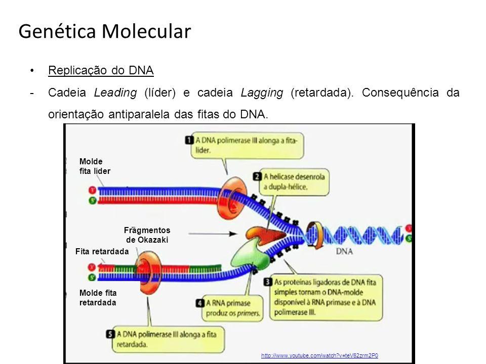 Genética Molecular Replicação do DNA
