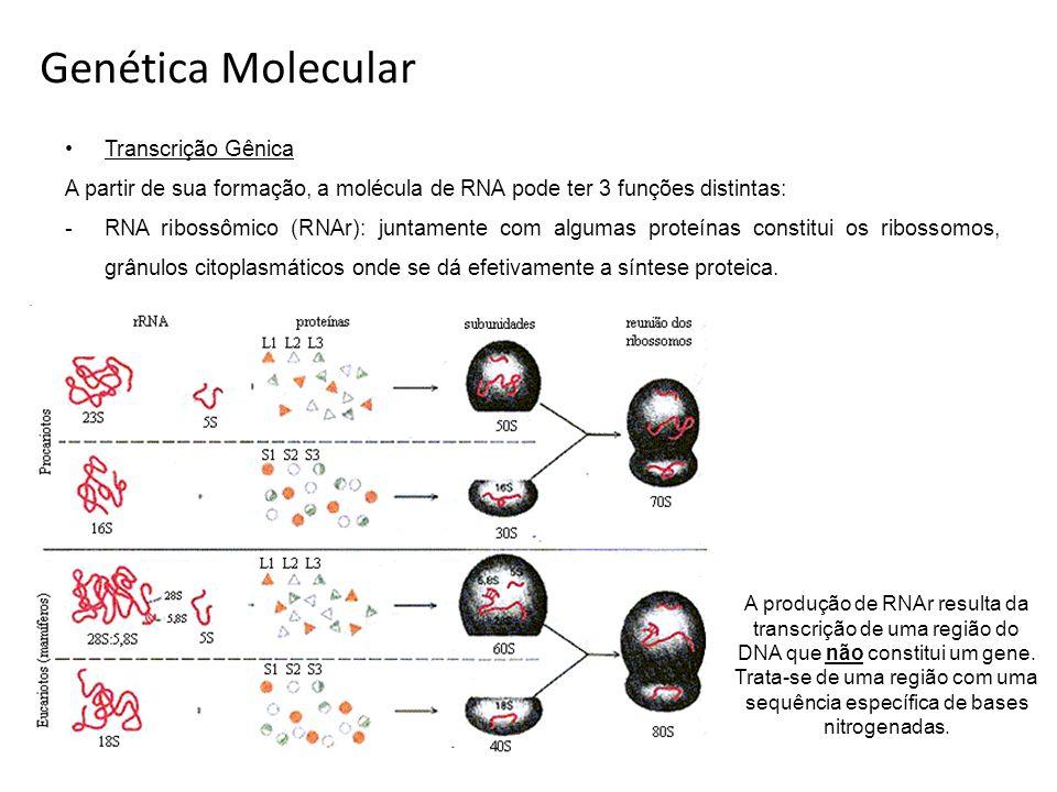 Genética Molecular Transcrição Gênica