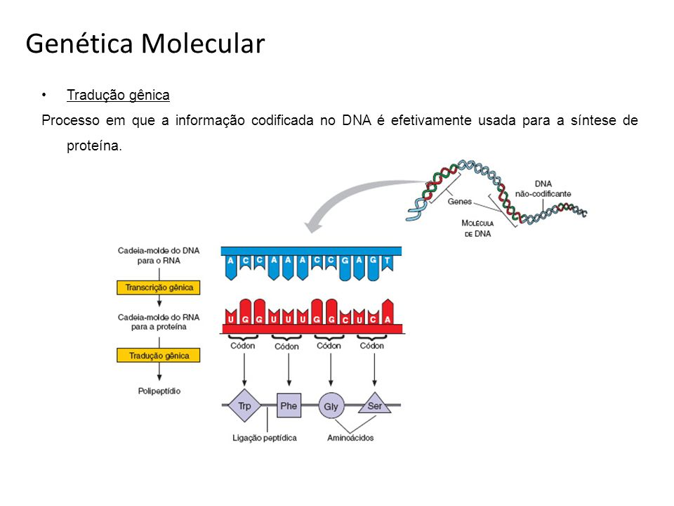 Genética Molecular Tradução gênica