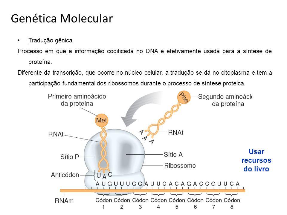 Genética Molecular Usar recursos do livro Tradução gênica