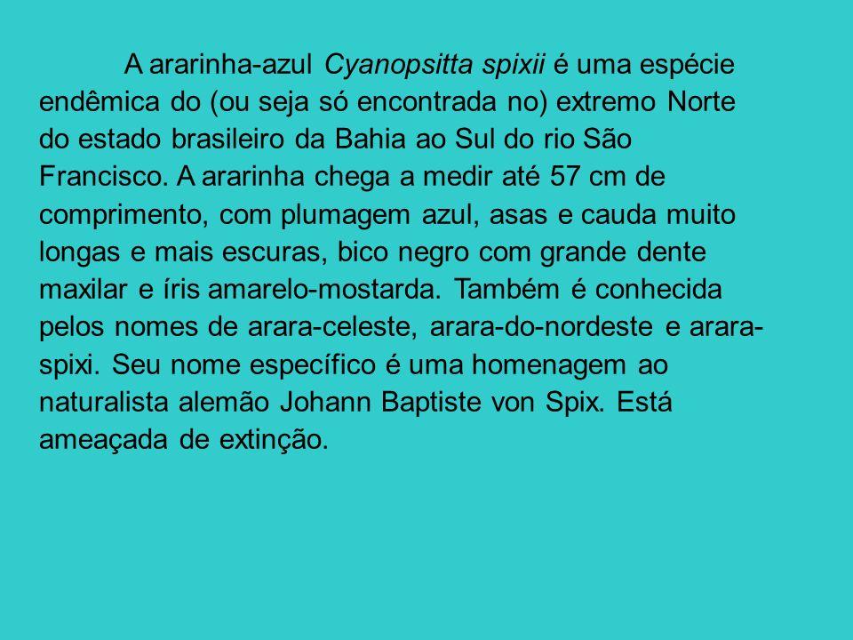 A ararinha-azul Cyanopsitta spixii é uma espécie endêmica do (ou seja só encontrada no) extremo Norte do estado brasileiro da Bahia ao Sul do rio São Francisco.