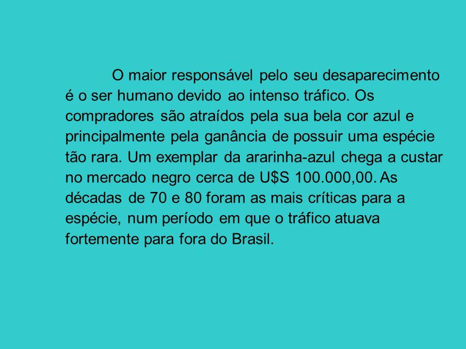 O maior responsável pelo seu desaparecimento é o ser humano devido ao intenso tráfico.