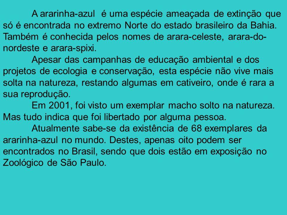 A ararinha-azul é uma espécie ameaçada de extinção que só é encontrada no extremo Norte do estado brasileiro da Bahia. Também é conhecida pelos nomes de arara-celeste, arara-do-nordeste e arara-spixi.