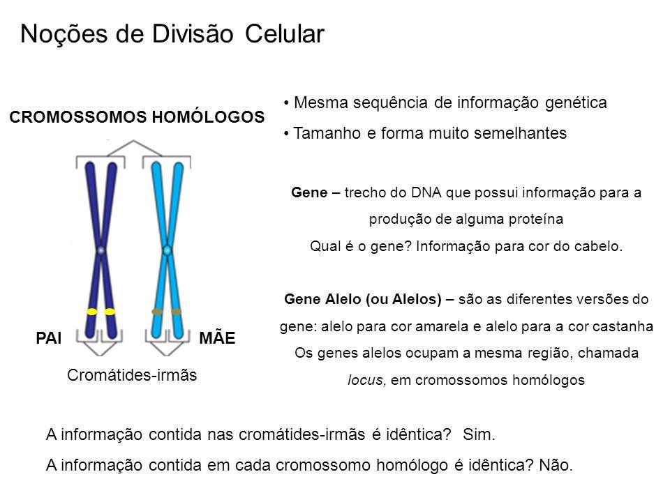 Qual é o gene Informação para cor do cabelo.