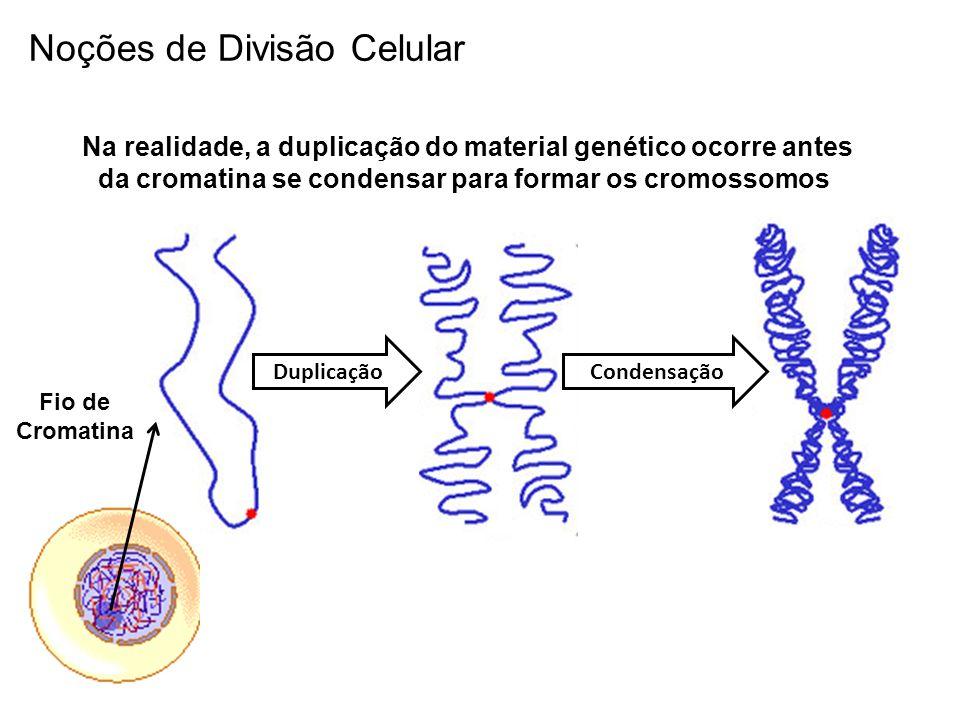 Noções de Divisão Celular