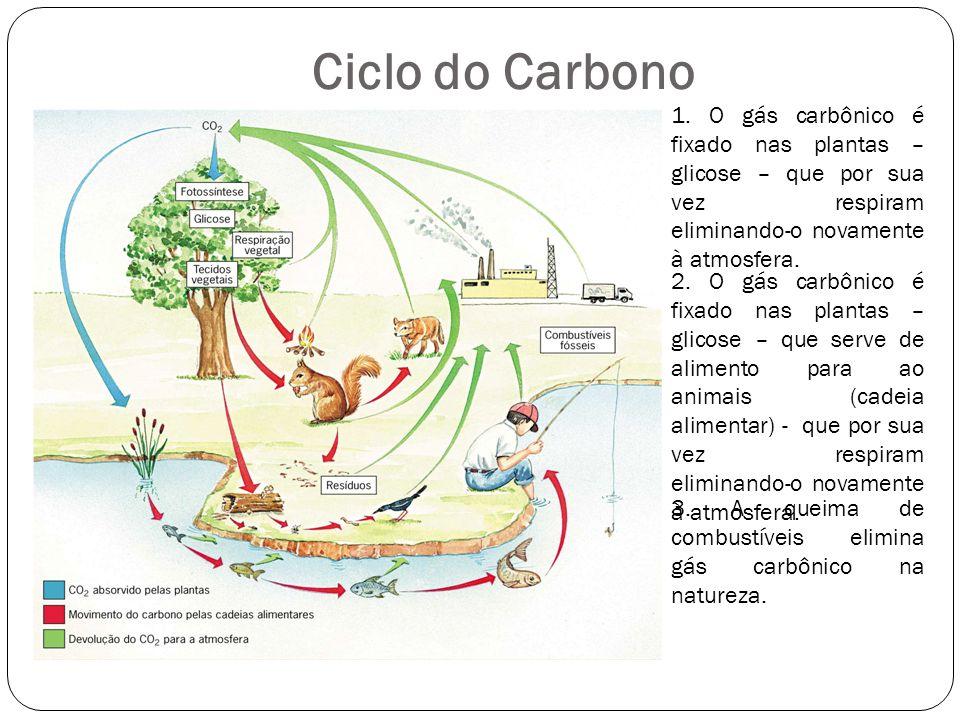 Ciclo do Carbono 1. O gás carbônico é fixado nas plantas – glicose – que por sua vez respiram eliminando-o novamente à atmosfera.
