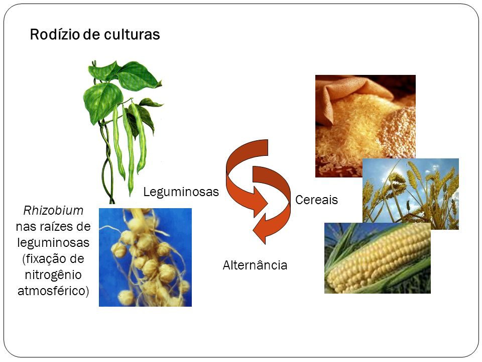 Rodízio de culturas Leguminosas Cereais