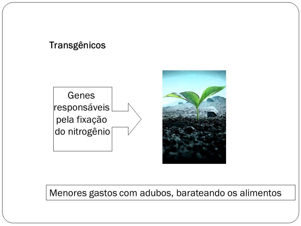 Transgênicos Genes. responsáveis. pela fixação.