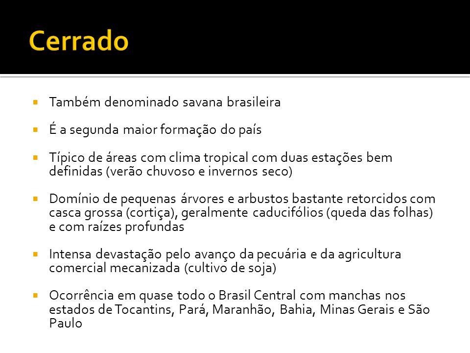Cerrado Também denominado savana brasileira