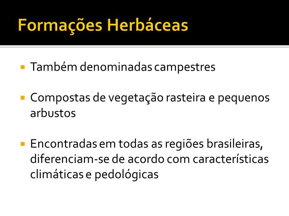 Formações Herbáceas Também denominadas campestres