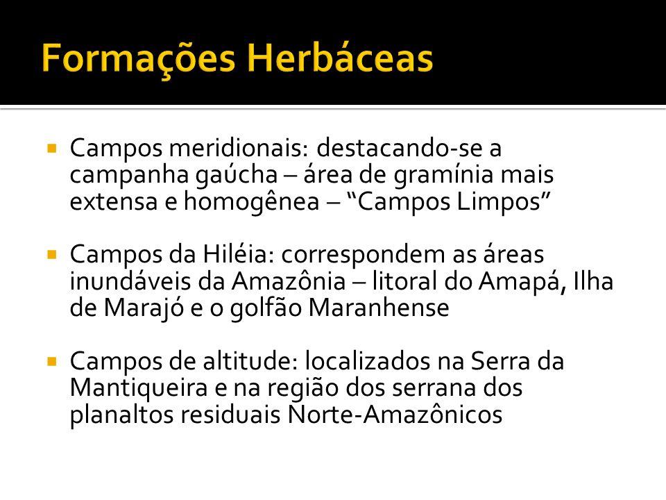 Formações Herbáceas Campos meridionais: destacando-se a campanha gaúcha – área de gramínia mais extensa e homogênea – Campos Limpos