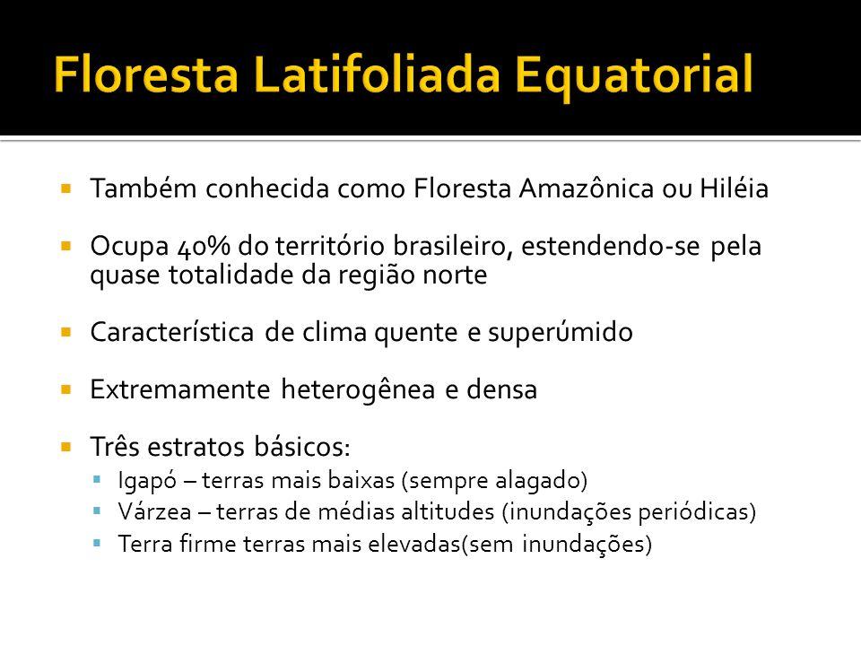 Floresta Latifoliada Equatorial