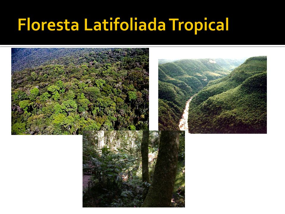 Floresta Latifoliada Tropical