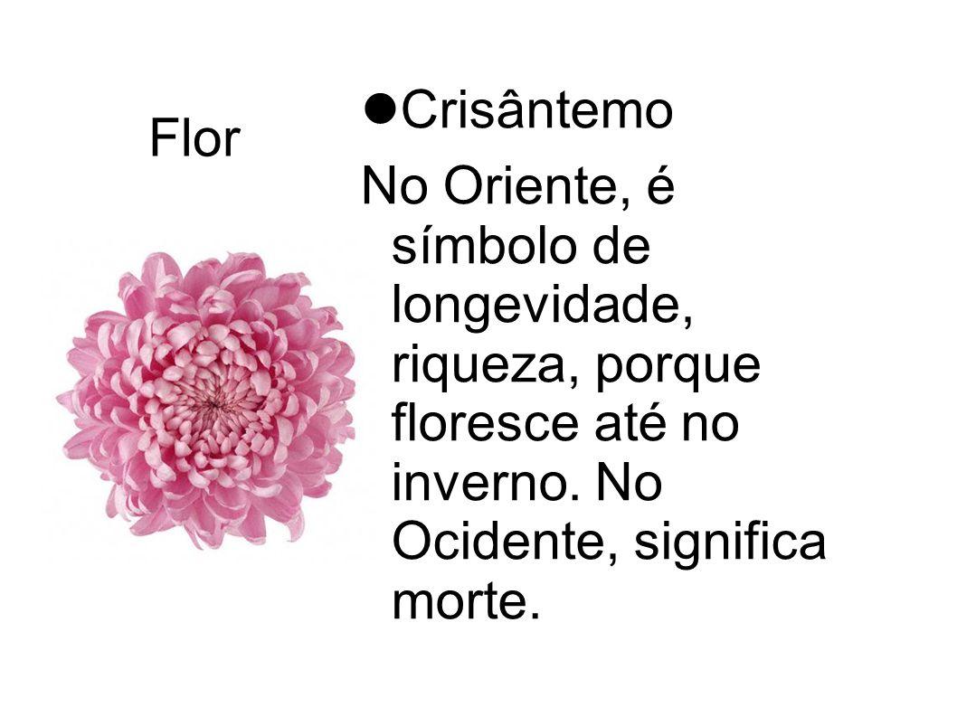 Flor Crisântemo.