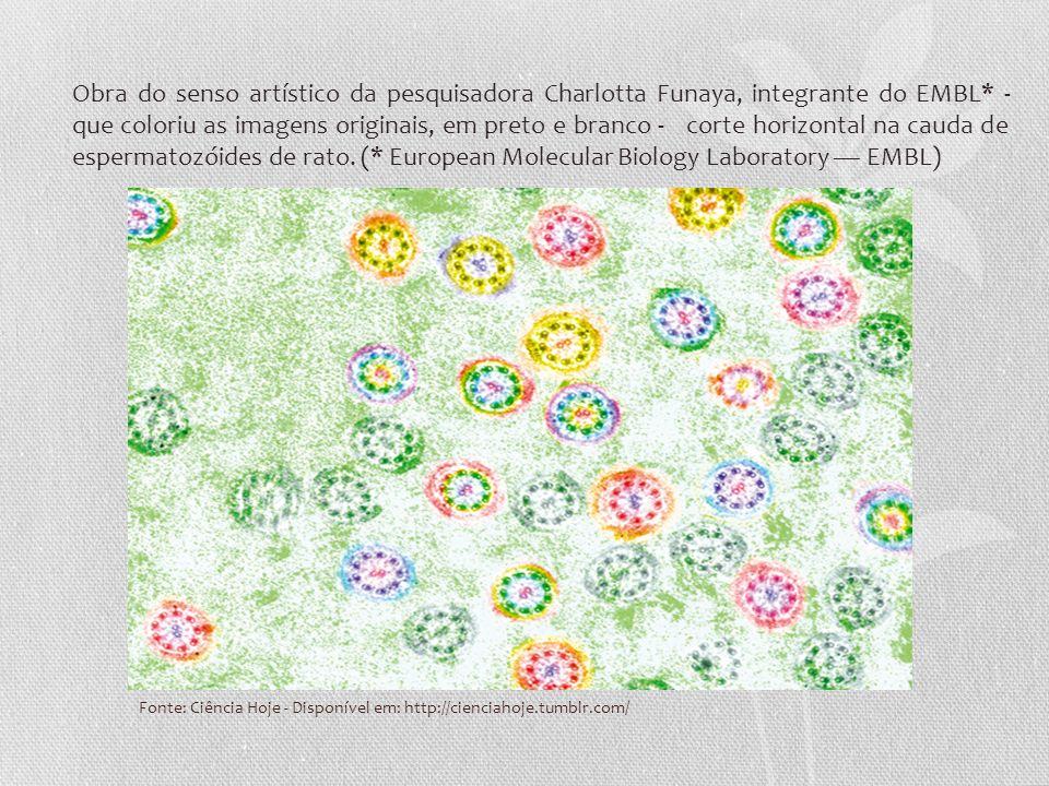 Fonte: Ciência Hoje - Disponível em: http://cienciahoje.tumblr.com/