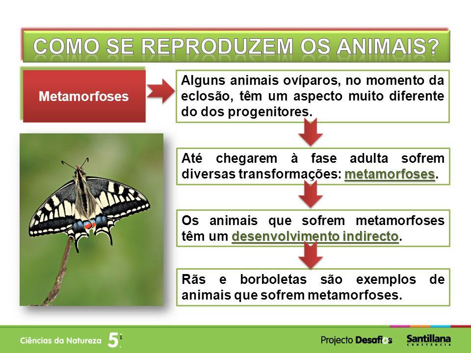 Como se reproduzem os animais