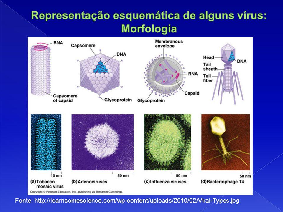 Representação esquemática de alguns vírus: Morfologia