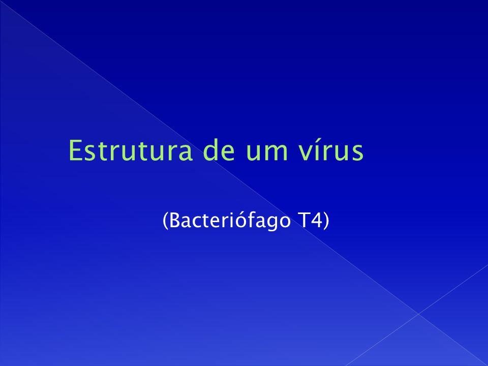 Estrutura de um vírus (Bacteriófago T4)