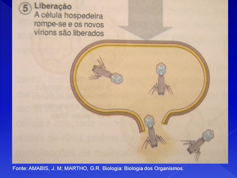 Fonte: AMABIS, J. M; MARTHO, G.R. Biologia: Biologia dos Organismos.