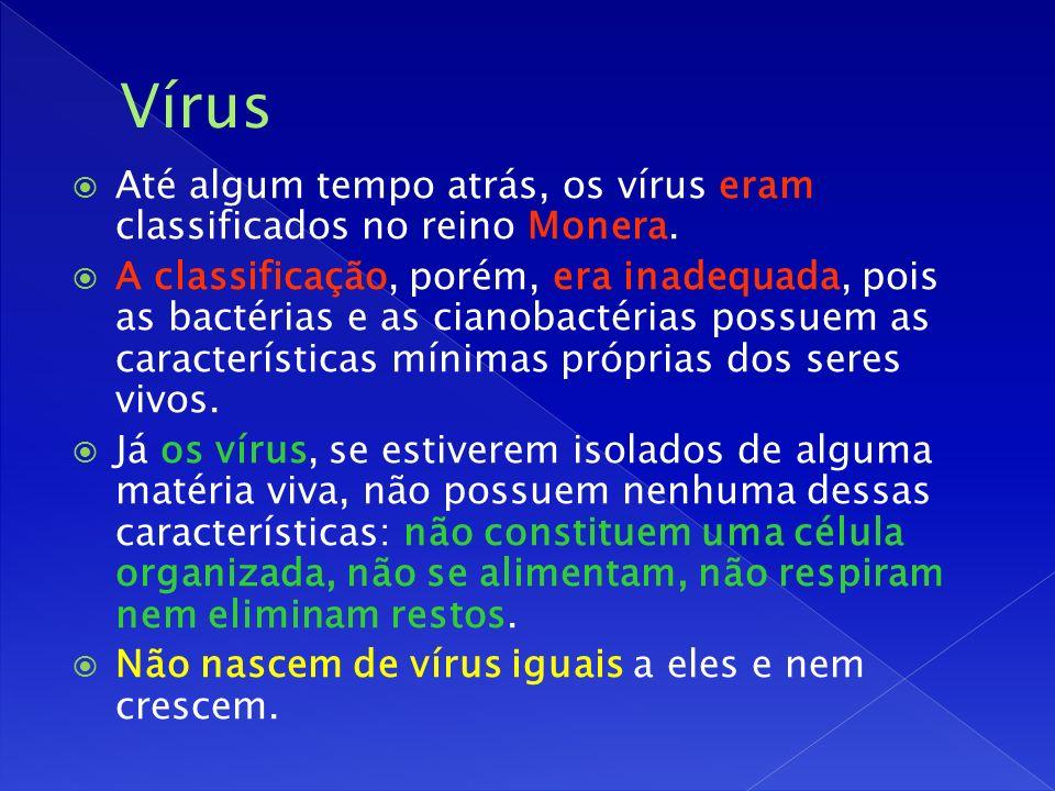 Vírus Até algum tempo atrás, os vírus eram classificados no reino Monera.
