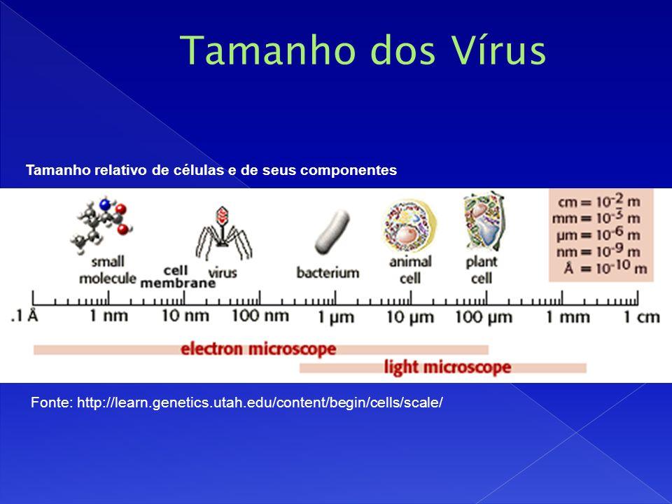 Tamanho dos Vírus Tamanho relativo de células e de seus componentes