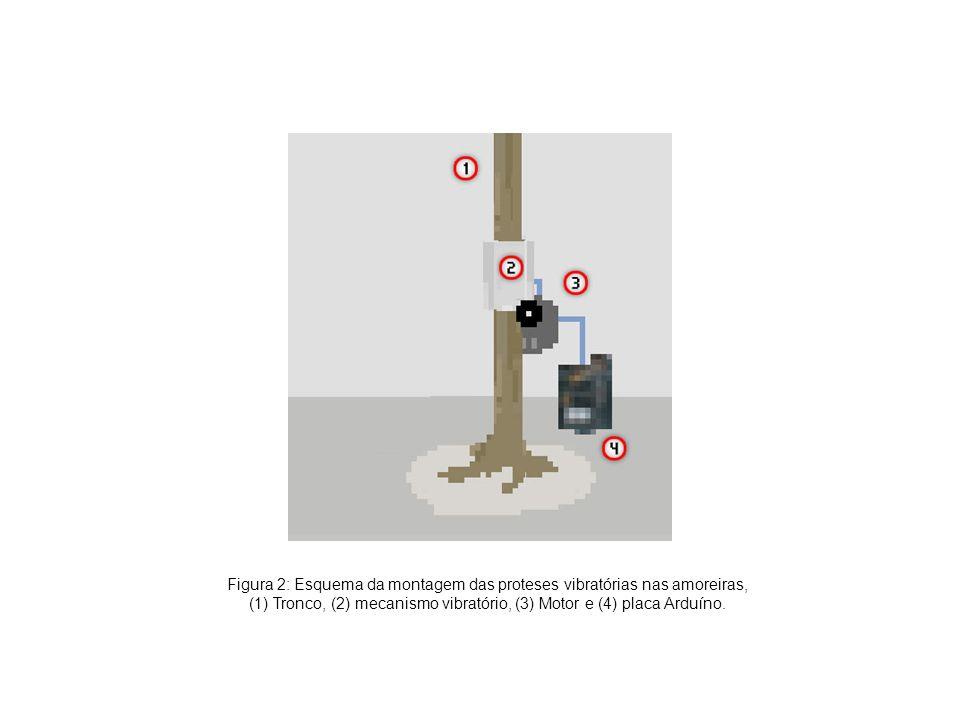 Figura 2: Esquema da montagem das proteses vibratórias nas amoreiras,