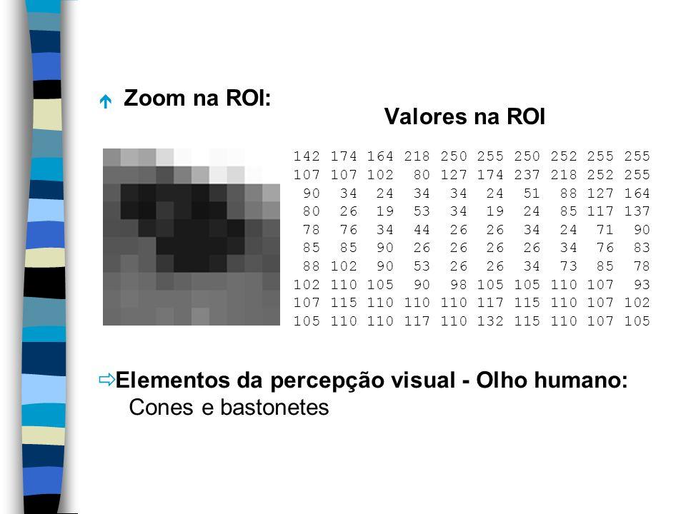 Elementos da percepção visual - Olho humano: Cones e bastonetes
