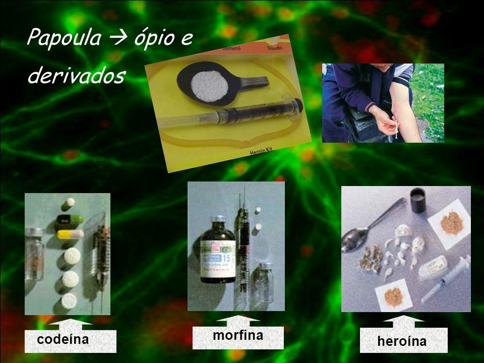 Papoula  ópio e derivados morfina codeína heroína