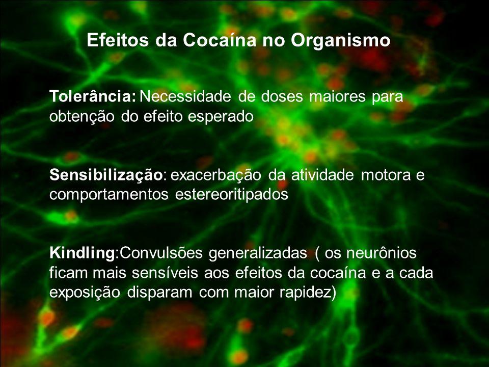 Efeitos da Cocaína no Organismo
