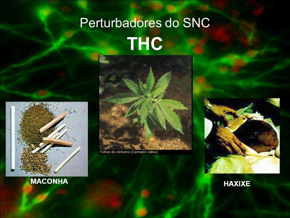Perturbadores do SNC THC MACONHA HAXIXE