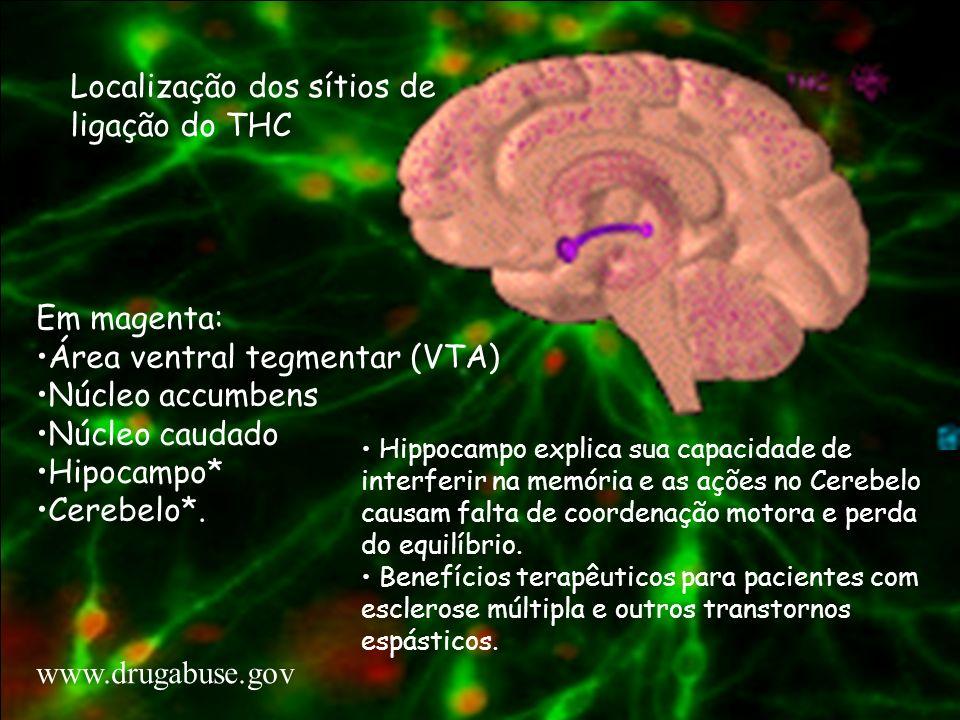 Localização dos sítios de ligação do THC