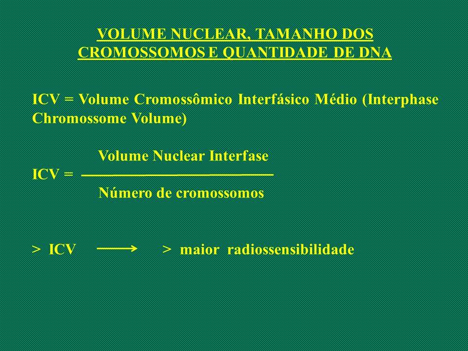 VOLUME NUCLEAR, TAMANHO DOS CROMOSSOMOS E QUANTIDADE DE DNA