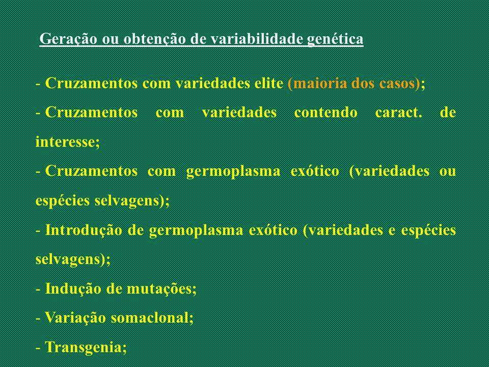 Geração ou obtenção de variabilidade genética