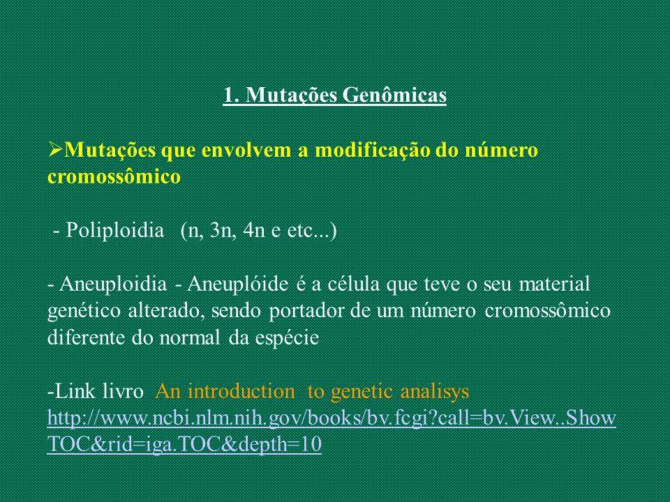 1. Mutações Genômicas Mutações que envolvem a modificação do número cromossômico. - Poliploidia (n, 3n, 4n e etc...)
