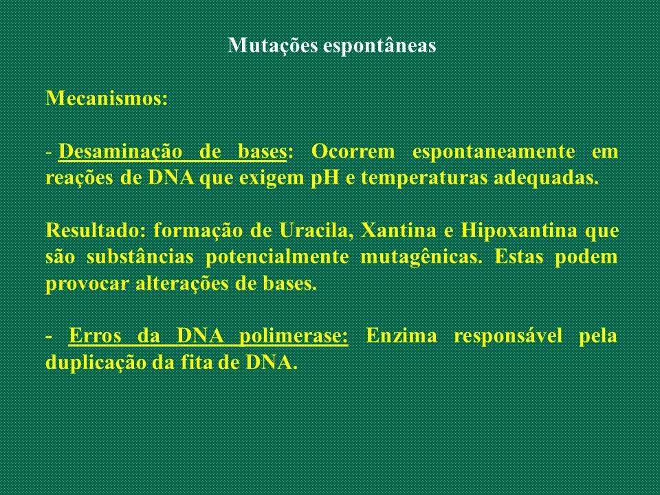 Mutações espontâneas Mecanismos: Desaminação de bases: Ocorrem espontaneamente em reações de DNA que exigem pH e temperaturas adequadas.