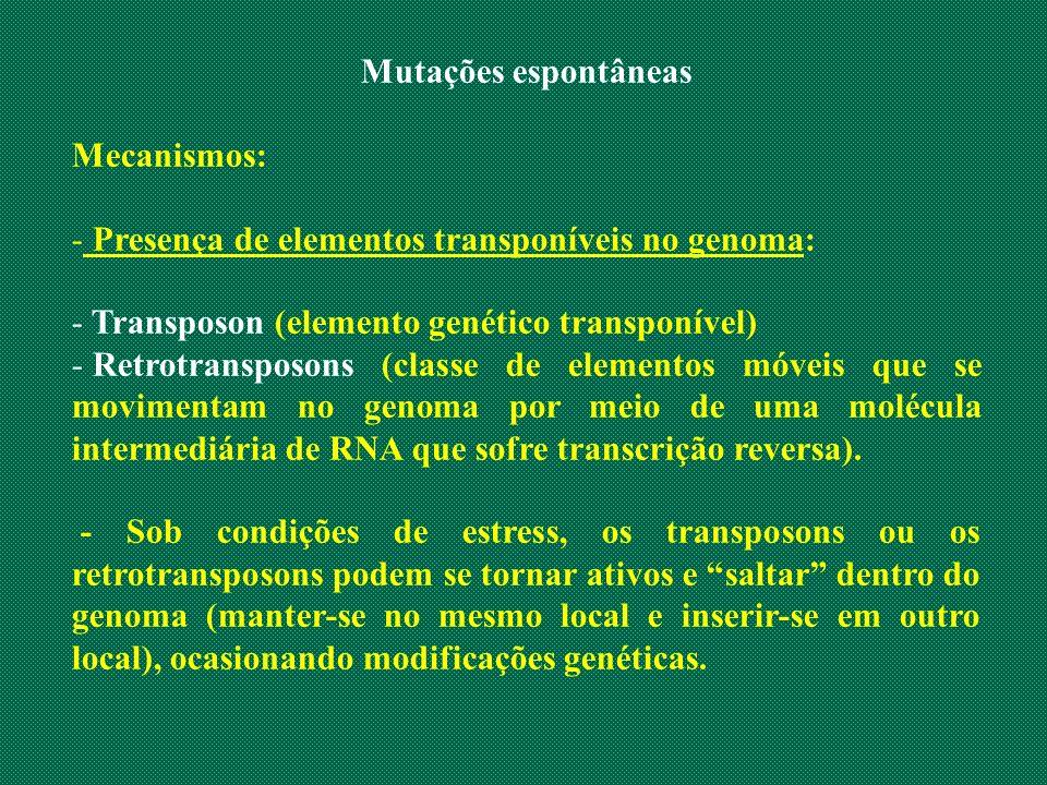 Mutações espontâneas Mecanismos: Presença de elementos transponíveis no genoma: Transposon (elemento genético transponível)