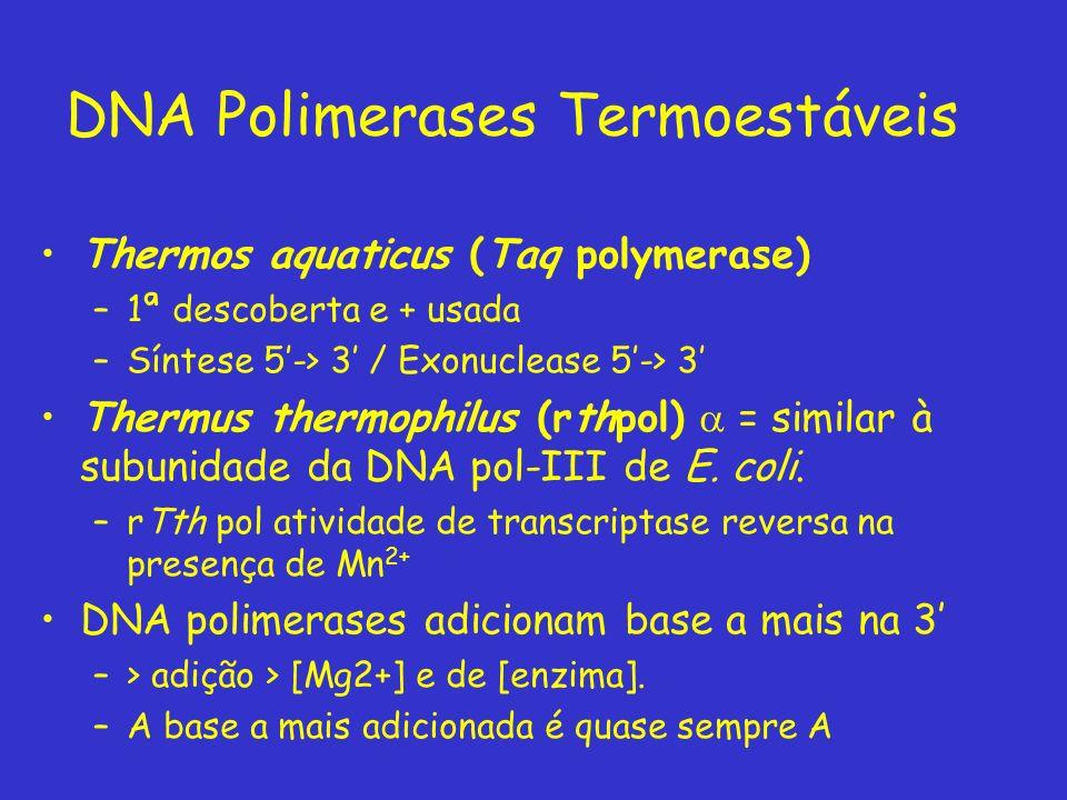 DNA Polimerases Termoestáveis